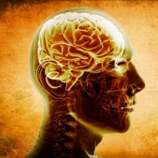 kognitiv